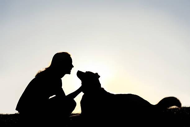 glückliche frau petting deutscher schäferhund hund silhouette - spielabend snacks stock-fotos und bilder