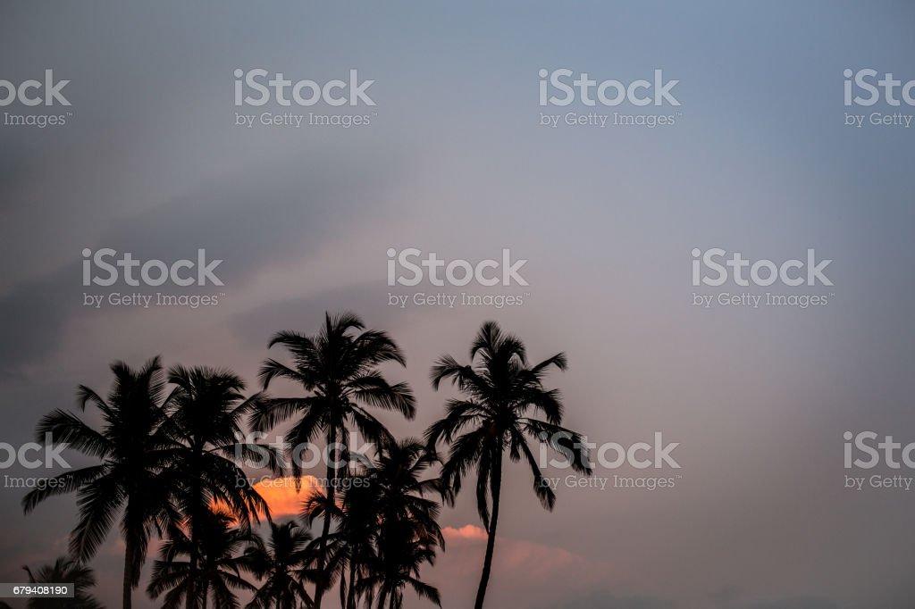 Silhouette_Palmtree royalty-free stock photo