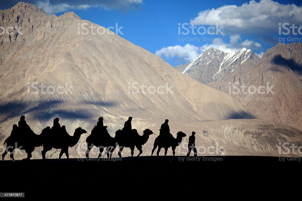 Silhouetted camel stock photo