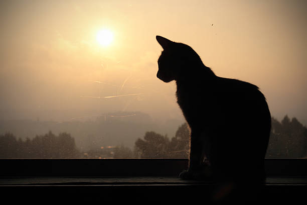 Silhouetted cat in a window at sunset picture id147062509?b=1&k=6&m=147062509&s=612x612&w=0&h=upjna62jz9ylwjgurppu bc ivekdeynlf1g4dzirig=