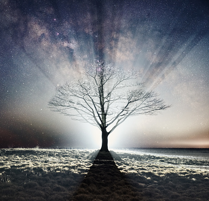 Silhouetted In Starlight Stock Photo - Download Image Now