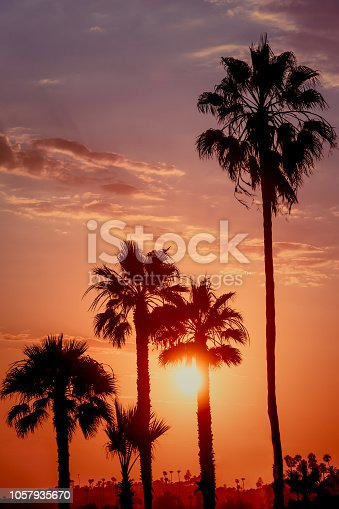 Background Image of Tropical Sunset With Palm Trees and Copy Space