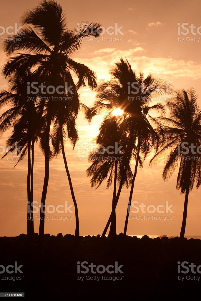 Silhouetted Palm Trees, Sunset, Beach, Tropical, Serene, Toned Image royalty-free stock photo