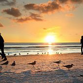 silhouetted people walking on sandy beach with seagulls over orange color sunset in Sarasota, Florida