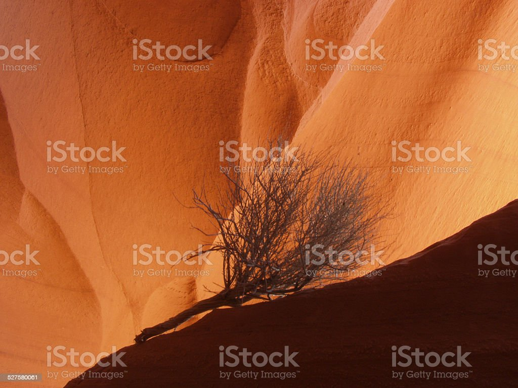 Silhouetted sagebrush in Lower Antelope Canyon,Arizona stock photo