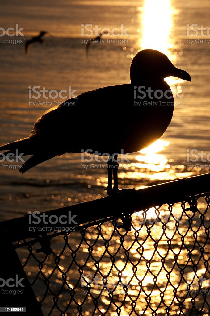 Silhouetted Seagull royalty-free stock photo