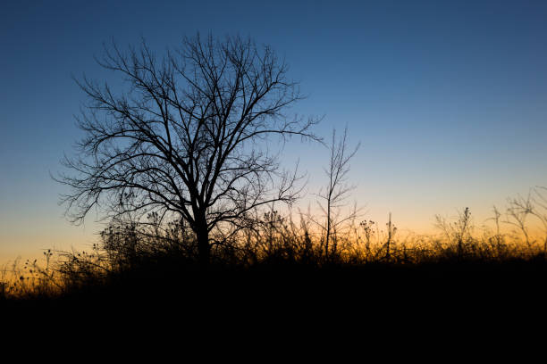 Silhouetted tree stock photo