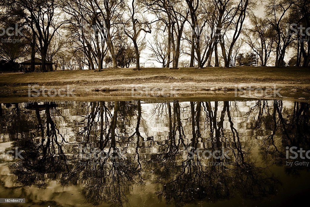 Silhouetted Tree Reflection On Water stock photo