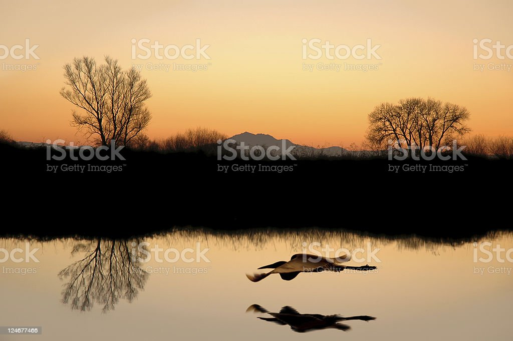 Silhouetted Tree Reflections stock photo