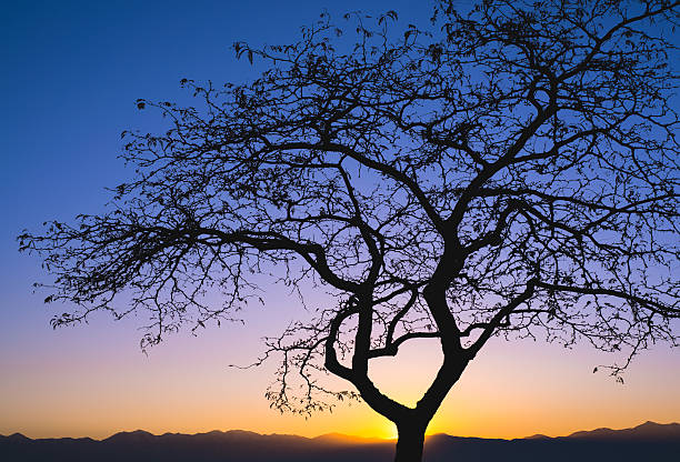 Silhouetted Tree Sunset in Utah stock photo