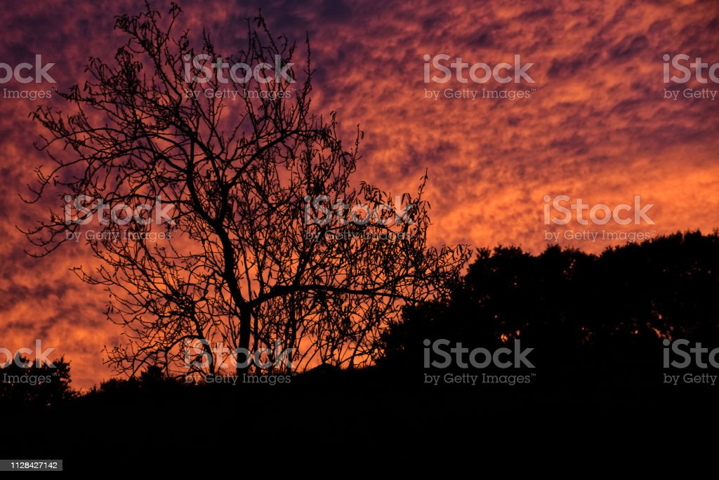 Silhouetted tree with mottled red sky stock photo