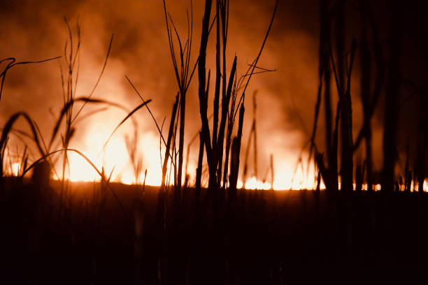 Silhouettee plants with fires and smoke blurry photo stock photo