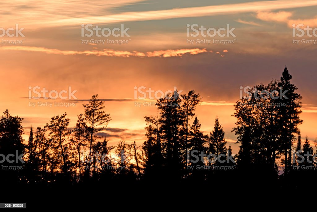 Silhouettes at Sunset in the North Woods stock photo