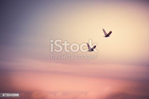 istock silhouettes couple bird fly in the air back home 673343998