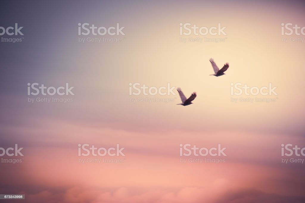 silhouettes couple bird fly in the air back home stock photo