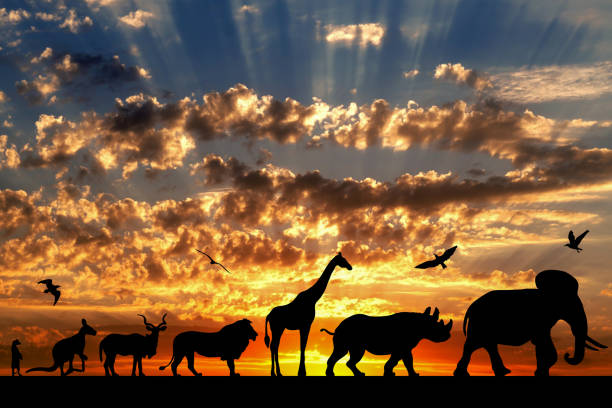 Silhouettes of animals on golden cloudy sunset background picture id696056142?b=1&k=6&m=696056142&s=612x612&w=0&h=f4 httngvqy42zu8ofnq4rjbbmqxxzdzwcjv7vjx2is=
