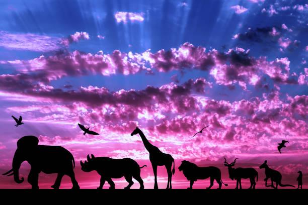 Silhouettes of animals on purple cloudy sunset background picture id946150384?b=1&k=6&m=946150384&s=612x612&w=0&h=i12eo5w4z7msnwrxq fxczh9nb9lodkhpqous5zsyya=