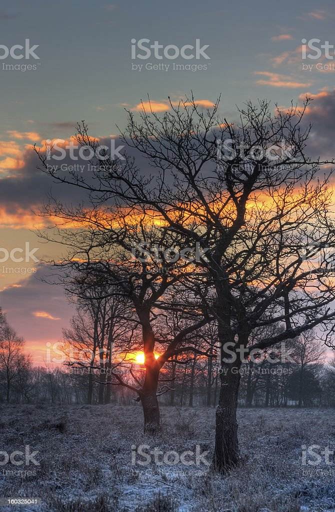 Silhouettes of bare trees royalty-free stock photo