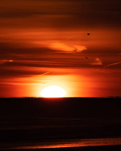 Silhouettes of birds flying as the sun sets on the horizon over the ocean.