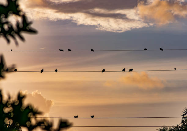 silhouettes of birds on a wire watching the sun rise stock photo