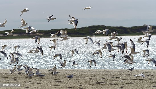 Silhouettes of birds over beach, shiny water, the coast of Piltun Bay, North Sakhalin, Russia