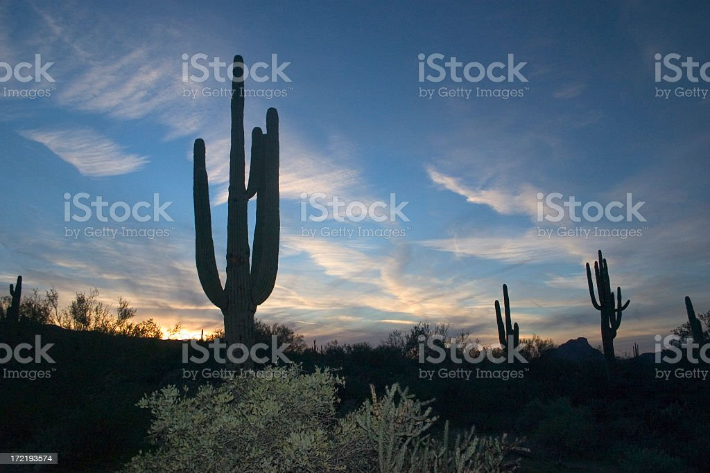 Silhouettes of cacti and plants at sunset royalty-free stock photo