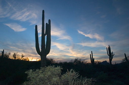 An evening in the Sonoran desert. Saguaro cacti are visible against a gorgeous sky.