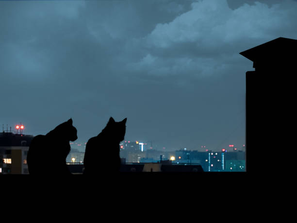 Silhouettes of cats on the roof night city away picture id929952598?b=1&k=6&m=929952598&s=612x612&w=0&h=yrvaghuk kxh75xoamo4papbwiw8twlpazuk6bfokxw=