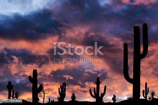 Saguaro National Park at sunset, Tuscon, Arizona, USA