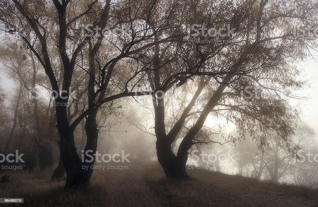 Silhouettes of old trees in a mist royalty-free stock photo