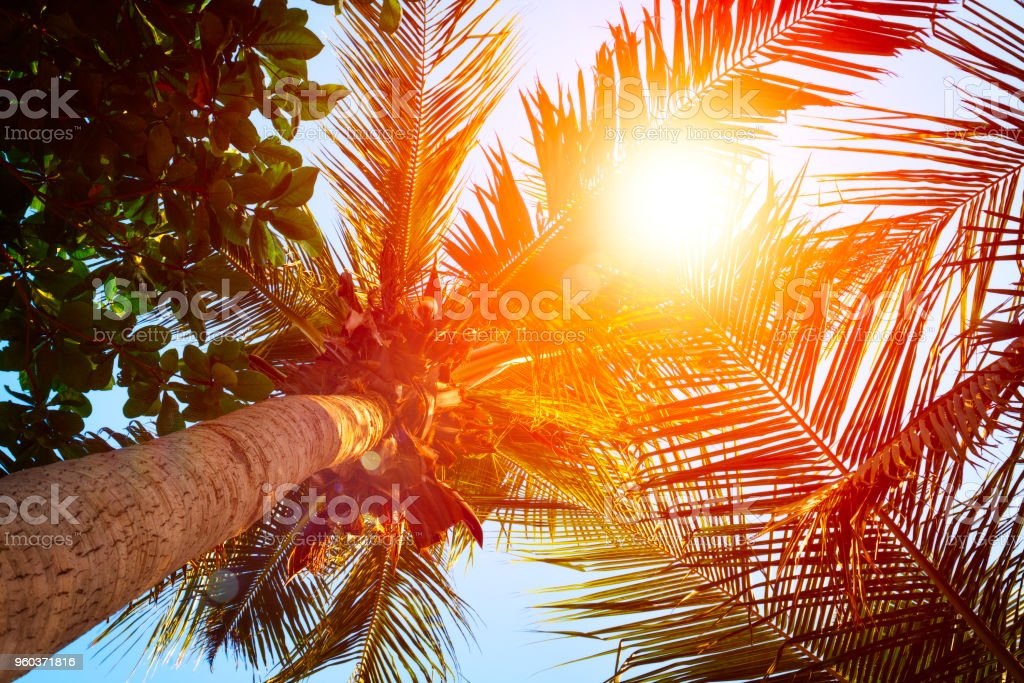 Silhouettes of palm trees against the sky during a tropical sunset. stock photo
