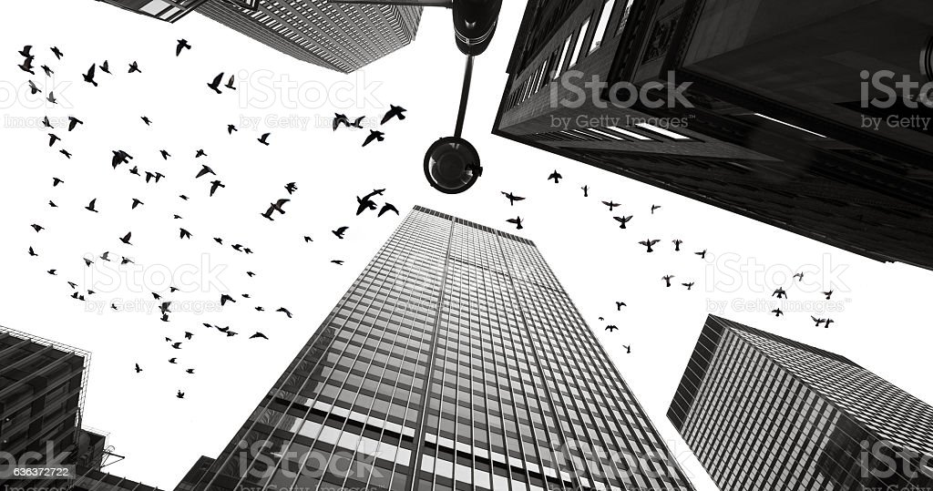 Silhouettes of pigeons between the skyscrapers of Manhattan stock photo