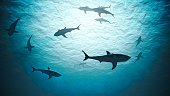 Silhouettes of sharks underwater in ocean against bright light. 3D rendered illustration.
