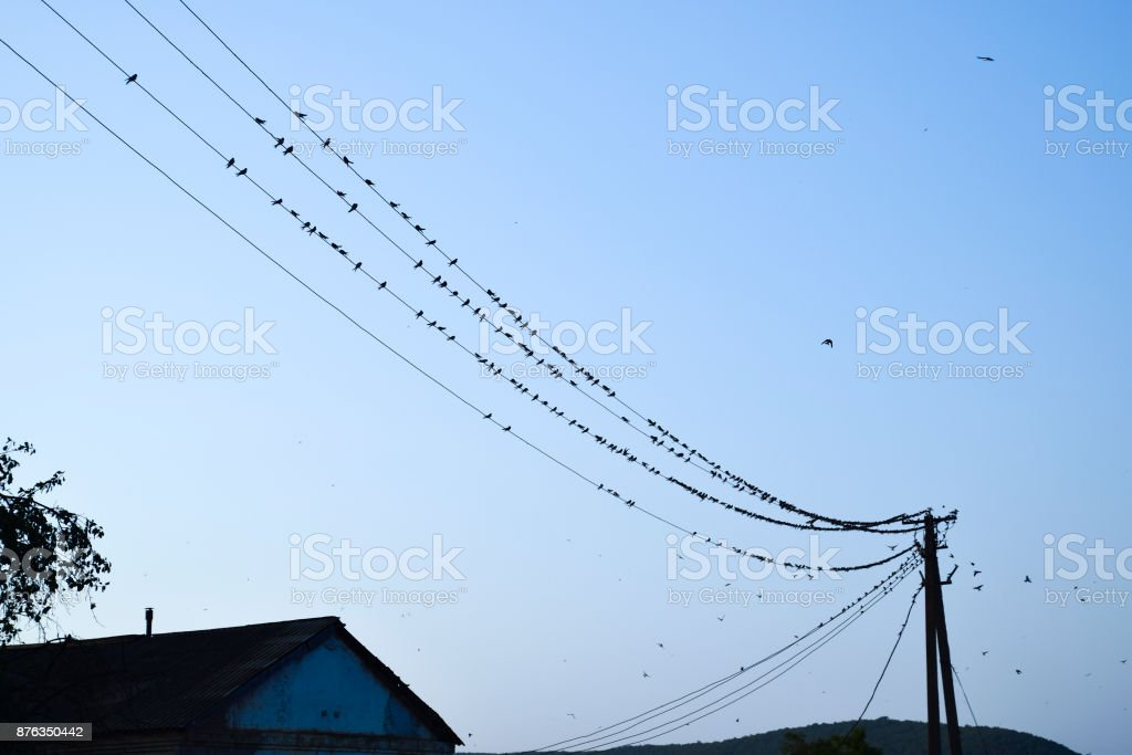 Silhouettes of swallows on wires. at sunset wire and swallows stock photo