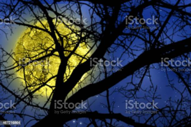 Photo of Silhouettes of the forest in winter with starry skies