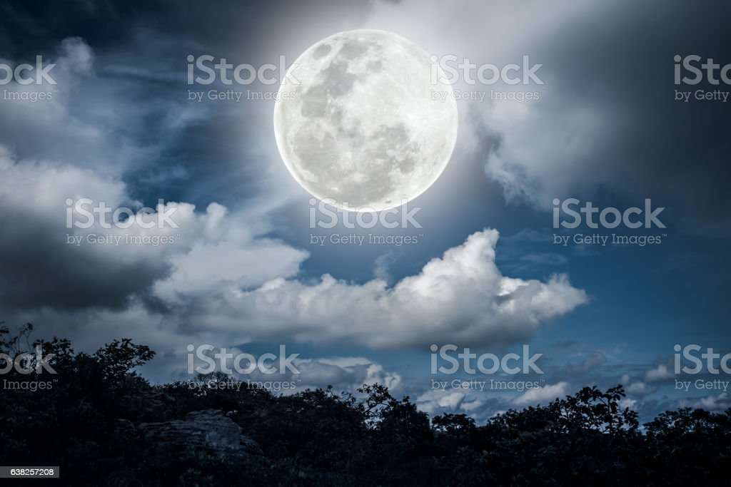 Silhouettes of tree and nighttime sky with beautiful full moon stock photo