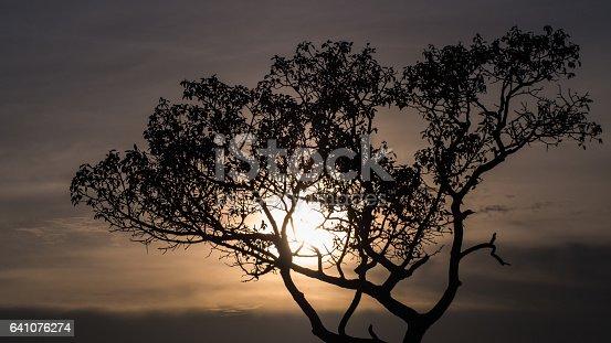 istock Silhouettes of Tree 641076274