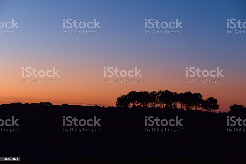 Silhouettes of trees on a hill in the background of the rising sun. Beautiful dawn with silhouettes of trees against a background of clear sky. Blue and orange sky without clouds. stock photo