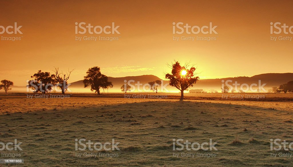 Silhouettes of trees over a golden sunset royalty-free stock photo