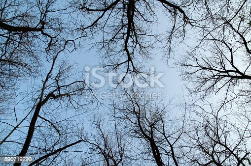 silhouettes of trees against the sky