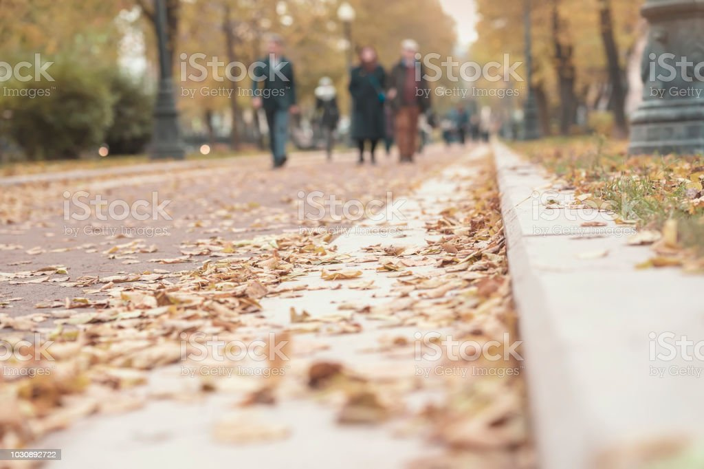 Silhouettes of unrecognizable people , walk in the autumn city on the fallen leaves, pavement with dry foliage, blurred bacground stock photo