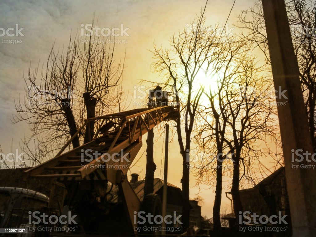 Silhouettes of workers pruning tall trees with an aerial work platform in the golden rays of the sun Silhouettes of workers pruning tall trees with an aerial work platform in the golden rays of the sun. The concept of work on the care of trees in cities, photo using filter Adult Stock Photo