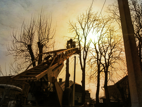 Silhouettes Of Workers Pruning Tall Trees With An Aerial Work Platform In The Golden Rays Of The Sun Stock Photo - Download Image Now