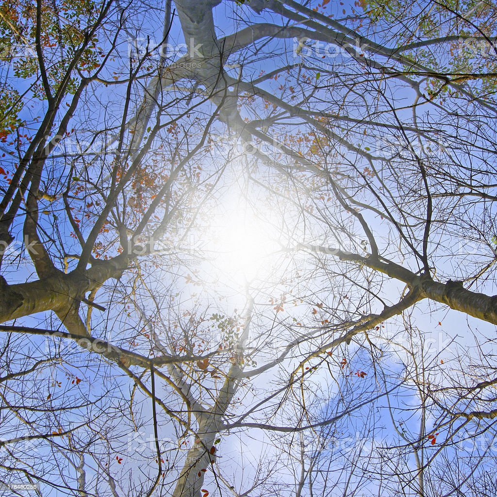 Silhouettes tree branches with sky royalty-free stock photo