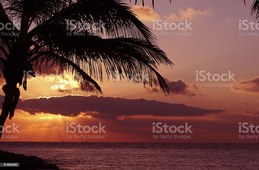 Silhoutte of a palm in sunset stock photo