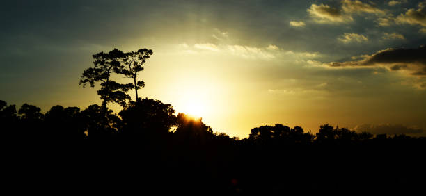 silhoutte of tree clusters as the sun sets - deign stock pictures, royalty-free photos & images