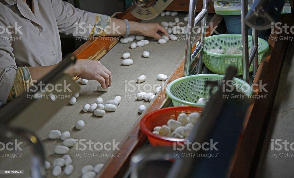 Silk Production stock photo