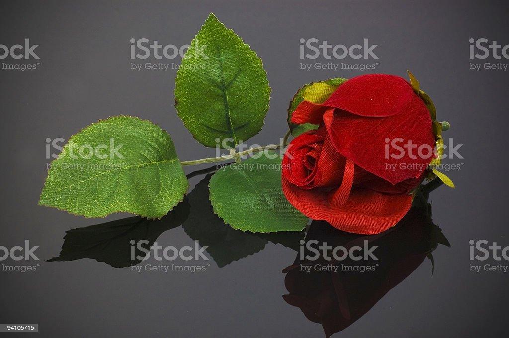 Silk Rose stock photo