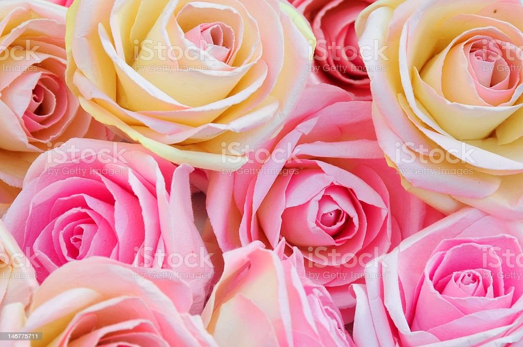 silk roses royalty-free stock photo
