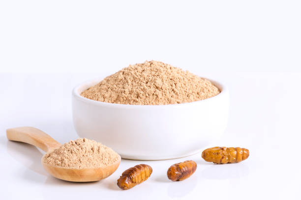 seidenraupe puppen (bombyx mori) mehl pulver insekten zum essen als lebensmittel aus gekochtem insekt fleisch in schüssel und löffel auf weißem hintergrund ist gute quelle für protein für saugenden konzept essbar. - mehlmotten stock-fotos und bilder